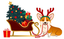 Cute Corgi Dog Wearing Reindeer Antlers Sitting Next To Santa's Sleigh With Brightly Decorated Christmas Tree And Sack Of Colorful Gifts. Pet Lovers, Animals, Dogs, Christmas, Winter Holiday Theme.