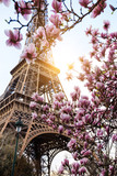 Fototapeta Wieża Eiffla - Blossoming magnolia against the background of the Eiffel Tower