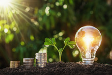 Lightbulb With Young Plant And Money Stack On Soil. Concept Saving Energy And Money