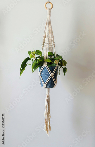 Poster Vegetal A hand-made macrame plant hanger made of 100% cotton, holding a blue ceramic pot with a Brazil Philodendron plant. A wooden ring is used to hang.