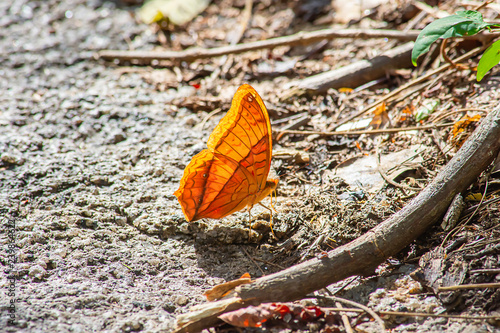 Photo  Orange butterfly with beautiful patterns on the rocks.