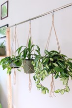 A Macrame Makers Studio. Three Jute Twine Macrame Plant Hangers Hanging From A Metal Rod.
