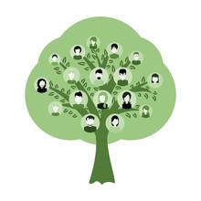 Genealogy Tree For Dna Ancestors Illustration Isolated
