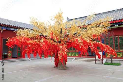 Valokuva red prayer flag tree in Confucian temple, China