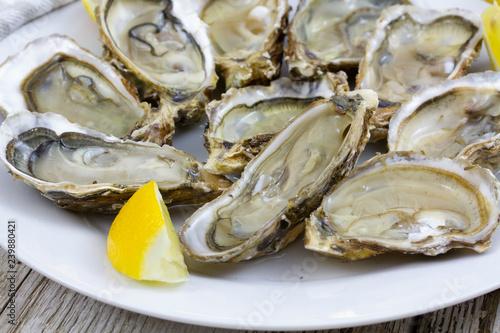 Fotografija oyster