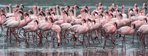 Fotobehang Flamingo Pink flamingoes at Walvis Bay, Namibia