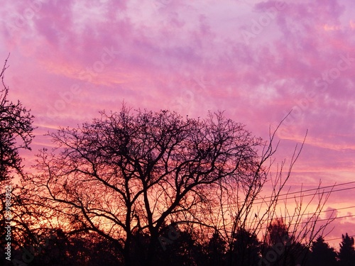 Photo Stands Candy pink tree in sunset