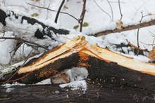 Tree Branch Broken Heavy Snowfall
