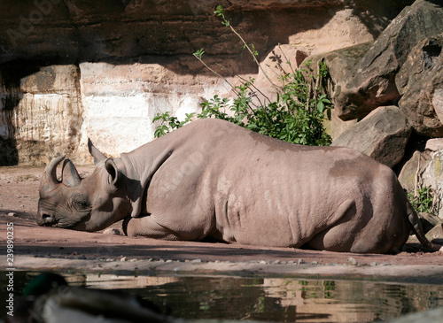 Rhino by the water