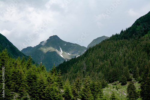 Foto op Aluminium Algerije Forested mountain slope in low lying cloud with the evergreen conifers shrouded in mist in a scenic landscape view, transfagarasan, romania