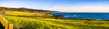 Panoramic View Of The Pacific Ocean Coastline Close To Pescadero, California; Bermuda Buttercup Wildflowers (Oxalis Pes-caprae) Blooming On The Shoreline