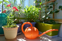 Small Urban Garden On The Balcony. Blooming Red Petunia, Osteospermum And Thunbergia In Flower Pots And Containers, And Orange Watering Can.