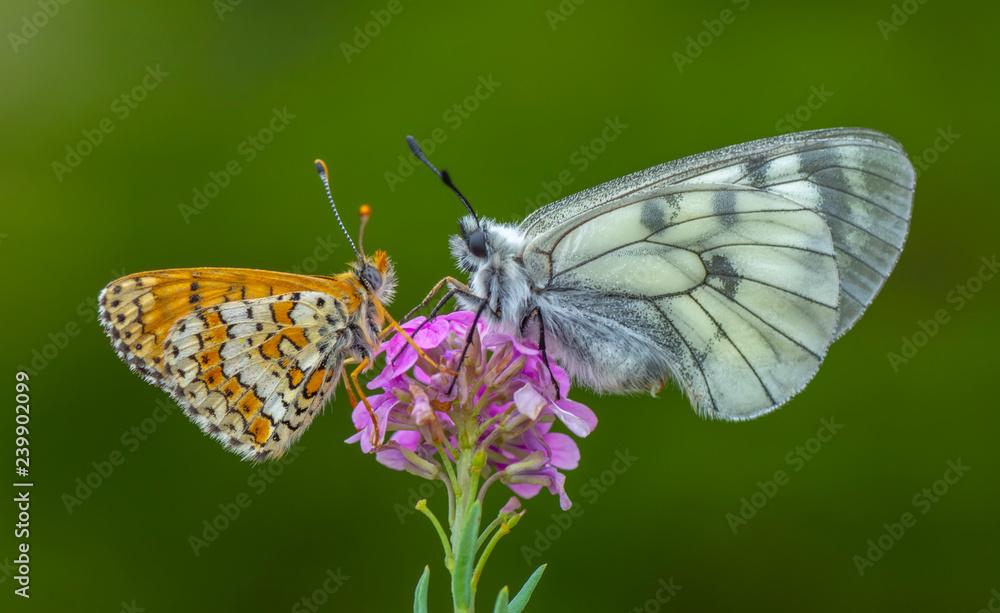 Fototapeta Closeup butterfly on flower