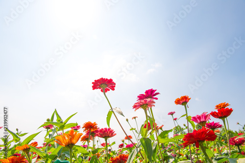 Foto op Canvas Bloemen 가을 꽃 가을 풍경 야생화 배경 백그라운드 이미지
