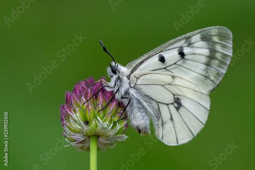 Recess Fitting Butterfly Closeup butterfly on flower