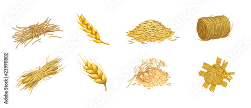 Photo vector set of isolated images of grain crops and ears of hay and straw weaving i