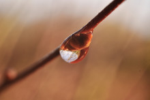 Drop Of Water On Branch