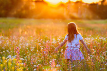 A Little Girl Walks In The Rays Of A Sunset In A Flowering Meadow, Enjoying The Summer, Warmth, Sun, Flowers, Freedom. Sunset Background