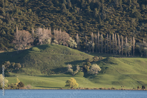 Fotografie, Obraz  The view across Lake Okareka to the wooded hillside and lush, green, dairy farmland in early spring