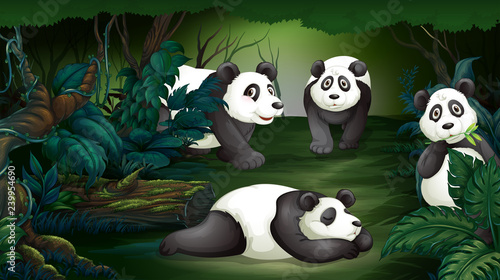Poster Kids Panda in dark forest