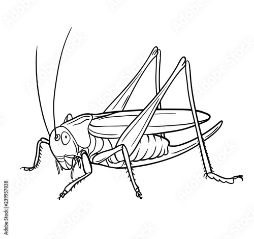 Valokuvatapetti Grasshopper.  Hand drawn style vector design for illustration