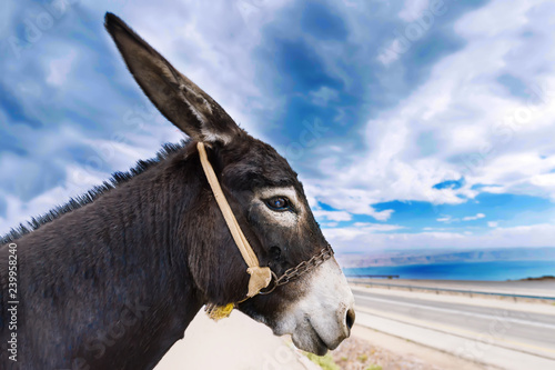Profile face of a donkey against the background of the blue cloudy sky. The best and funny donkey profile photo.