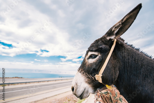 Profile of a donkey against the background of the seaside highway.