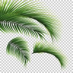 Palmino lišće. Zeleni list palme na prozirnoj pozadini. Cvjetna pozadina.