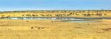 Fototapeta Sawanna - Wide angle panorama of wild animals like zebras, hartebeests and springboks drinking at Nebrownii waterhole in savannah dry season. Etosha National Park in Namibia.