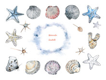 A Collection Of Seashells And ...