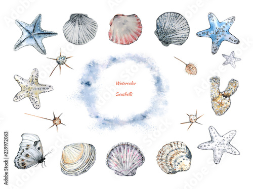 Fotografia  A collection of seashells and starfishes, corals, field plants and butterflies in the style of an outline, made in watercolor and ink for decorative use in design and decoration