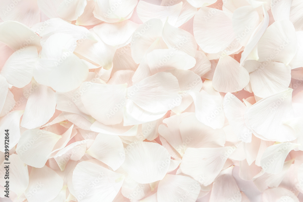 Fototapeta Background texture made of beige petals roses on pink background. Flat lay, top view. Valentine's background.