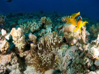Naklejka na ściany i meble seabed with underwater life