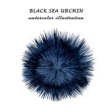 Watercolor Illustration Of Black Sea Urchin Isolated On White Background.
