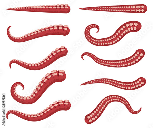 Fotografie, Obraz  Octopus tentacles vector cartoon set isolated on a white background