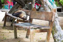 Sea Lion Sleeping On Bench At The Galapagos Islands