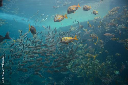 Foto op Plexiglas Koraalriffen Nassau, Bahamas - MAY 2, 2018: Marine Habitat aquarium in the Atlantis Paradise Island resort, located in the Bahamas
