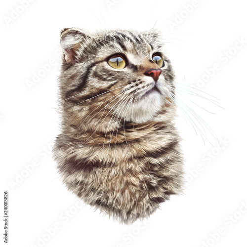 Cute Cat Isolated On White Background Realistic Portrait Of