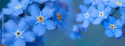 banner spring background forget-me-not flowers