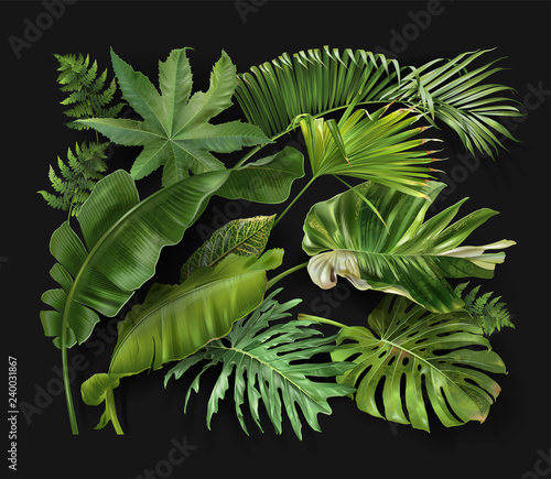 Vector banner with green tropical leaves on green Wall mural