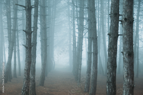 Papiers peints Forets fog in the forest. misty dark forest