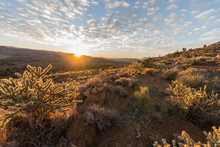 Sunrise View And Cholla Cactus At Red Rock Canyon National Conservation Area.  A Popular Natural Area 20 Miles From Las Vegas, Nevada.