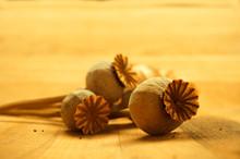 Dried Poppy Seed Pods