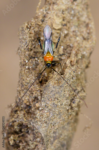 Photo  Image of an Assassin bug on nature background. Insect. Animal