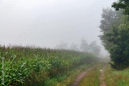 Spoed Foto op Canvas Khaki View on a green field covered in fog
