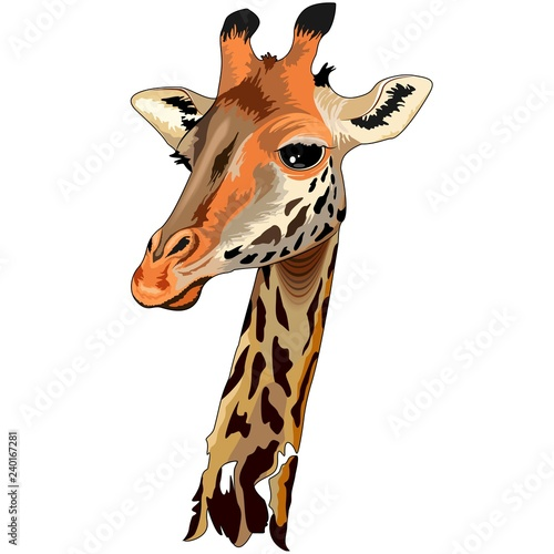 Poster Draw Giraffe Wild African Animal Portrait