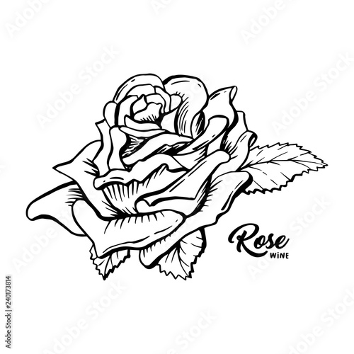 rose wine flower hand drawn vector illustration floral ink pen clipart black and white realistic rosebud outline drawing rose wine sketch with lettering logo emblem label isolated design element buy this rose wine flower hand drawn vector
