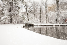 Beautiful Rural Winter Scene W...