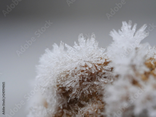 natural design with frost crystals on a plant close up Canvas Print