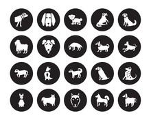 20 Vector Icon Set : Boerboel Dog, Akita Alaskan Klee Kai American Eskimo Dog Hairless Terrier Berger Picard Dog Isolated On Black Background